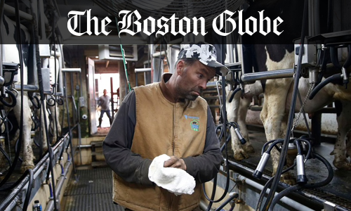 Local farms donate thousands of gallons of milk to those in need as market dissolves - Boston Globe