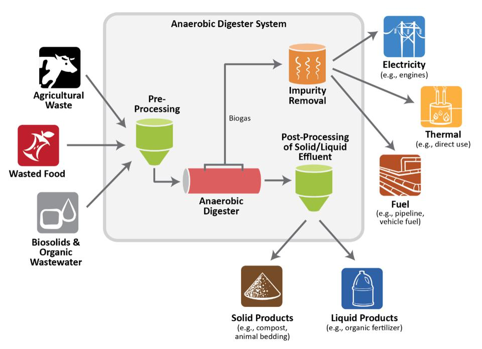 Full cycle diagram of anaerobic digestion  system